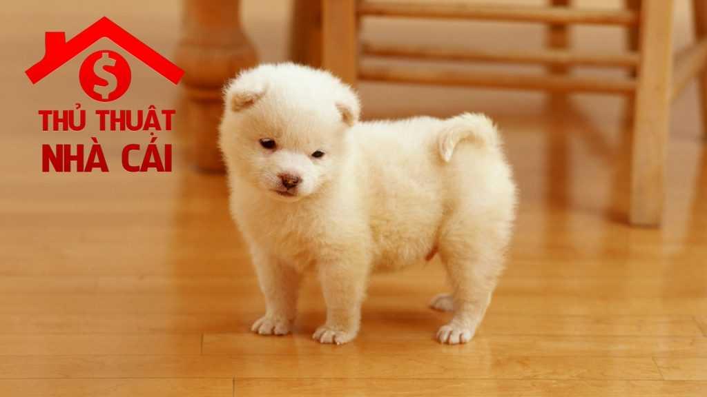 Chó đẻ 1 con là điềm gì