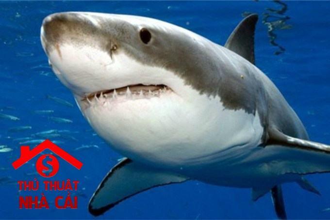 Nằm mơ thấy cá mập