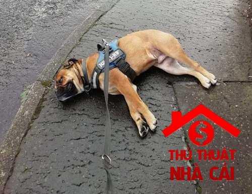 Chó chết là điềm gì