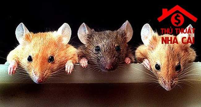 Mơ thấy chuột là điềm gì? Giải thích giấc mơ về con chuột