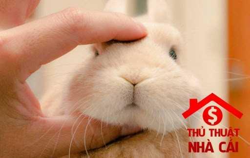 Nằm mơ thấy con thỏ là điềm gì