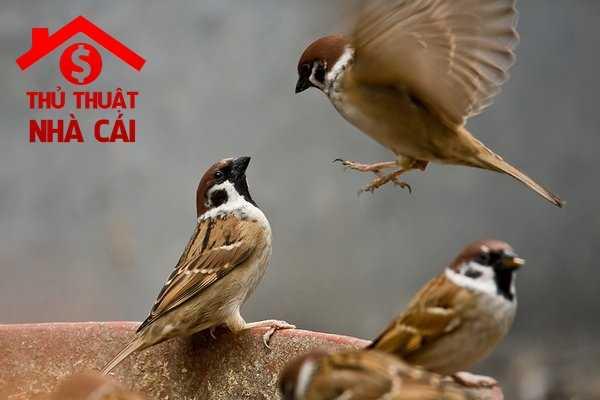 Mơ thấy chim là điềm gì? Giải thích giấc mơ thấy con chim trong mơ